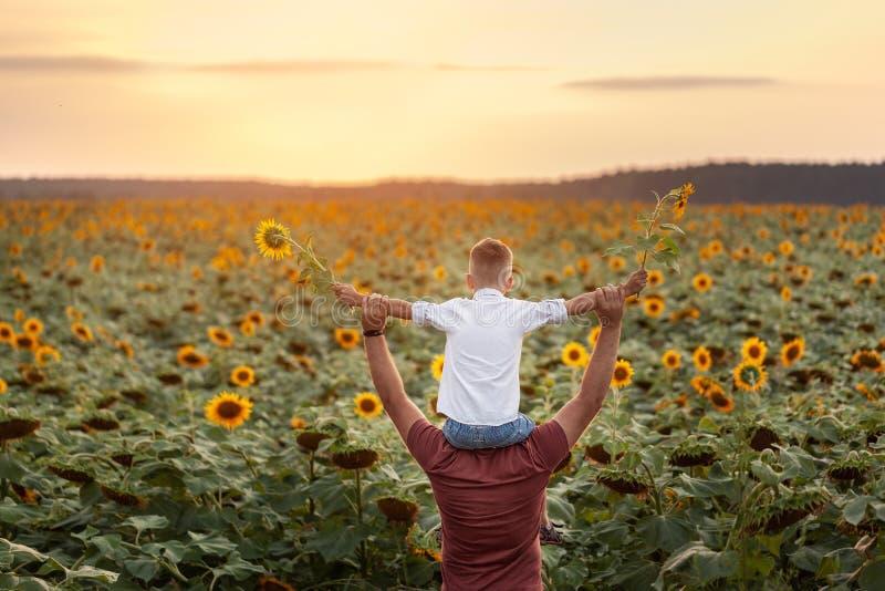 Lycklig familj: fader med hans son på skuldrorna som står i solrosfält på solnedgången tillbaka sikt royaltyfri bild
