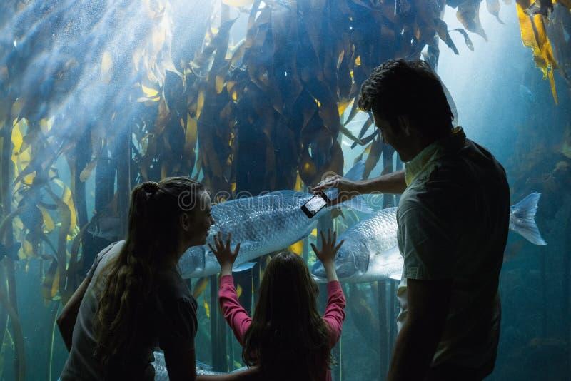 Lycklig familj som ser fiskbehållaren royaltyfri foto