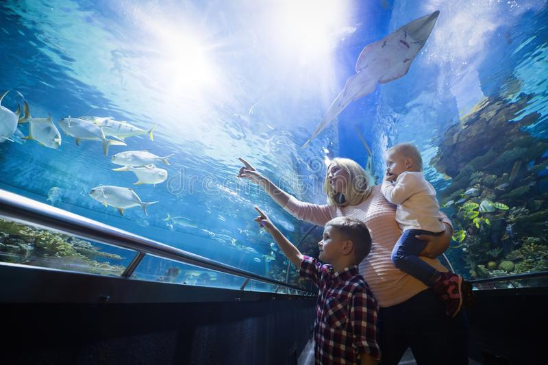 Lycklig familj som ser fiskbehållaren på akvariet arkivfoton