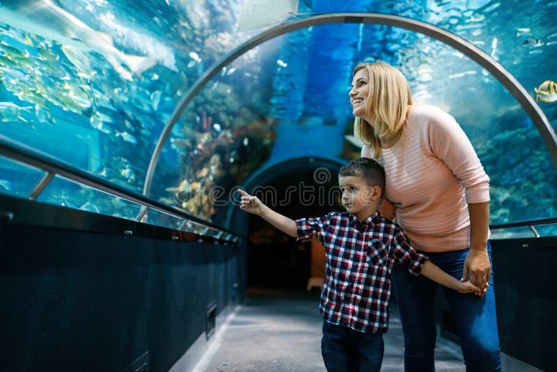 Lycklig familj som ser fiskbehållaren på akvariet arkivfoto