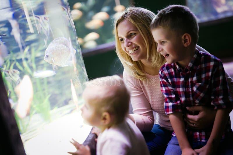 Lycklig familj som ser fiskbehållaren på akvariet royaltyfria foton