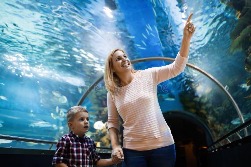 Lycklig familj som ser fiskbehållaren på akvariet royaltyfri fotografi