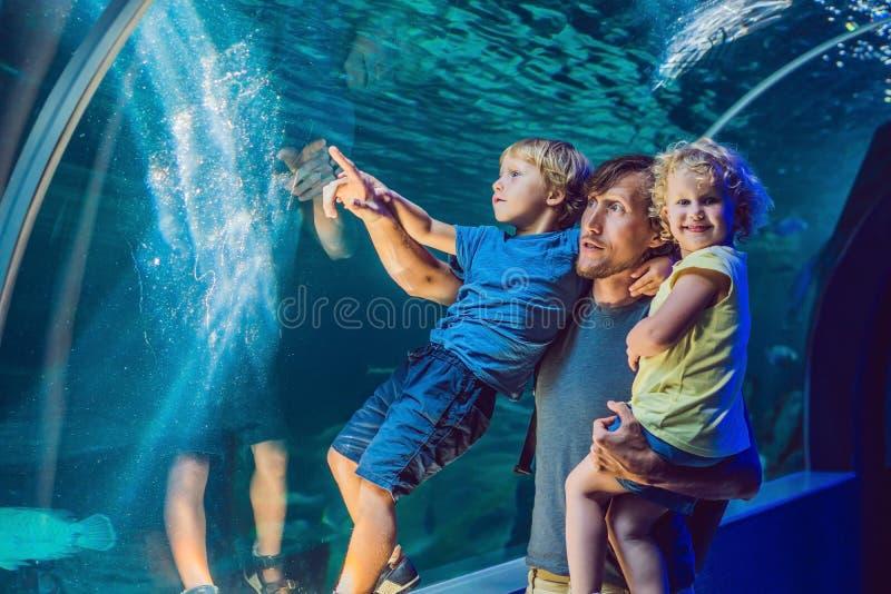 Lycklig familj som ser fisken i ett tunnelakvarium arkivbilder