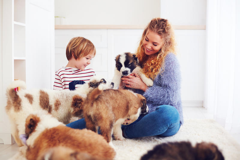 Lycklig familj som spelar med hemmastadda gulliga valpar arkivbilder