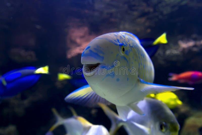 lycklig fisk royaltyfria bilder