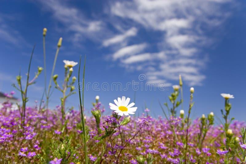 lycklig fjädersommar för 08 blomma arkivbilder