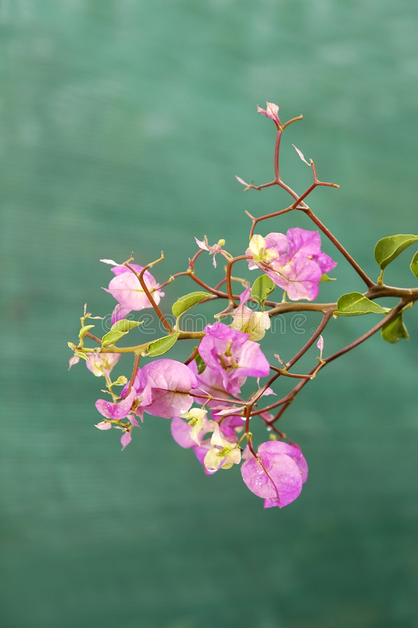 lycklig fjädersommar för blomma arkivfoton