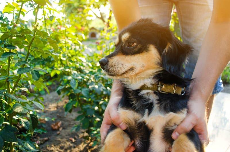 Lycklig fri tid med den älskade hunden! grabben spelar med ett husdjur i det trädgårds-/parkerar på en solig dag Svart vovve frit fotografering för bildbyråer