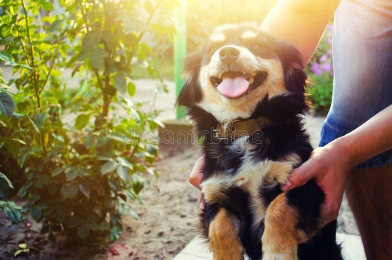 Lycklig fri tid med den älskade hunden! grabben spelar med ett husdjur i det trädgårds-/parkerar på en solig dag Svart vovve frit royaltyfri bild