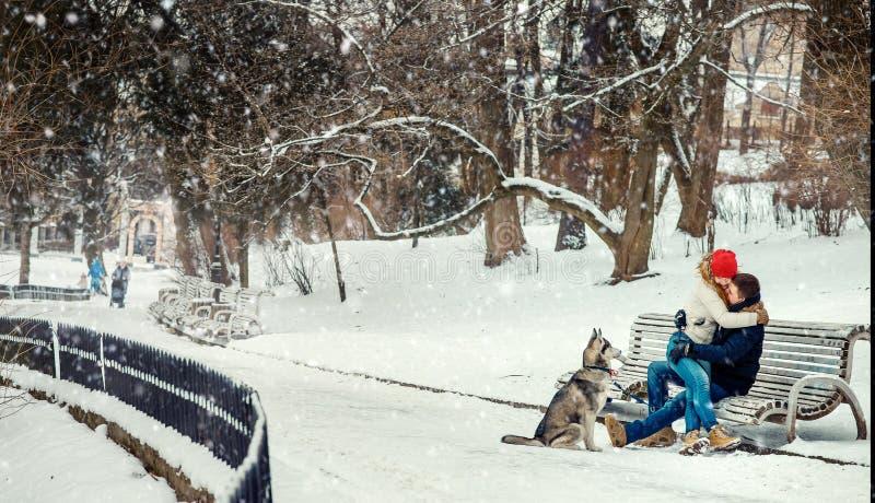 Lycklig gladlynt Siberian Husky Dog Sitting Bench Snow som för par kramar snöfallvinter royaltyfri foto