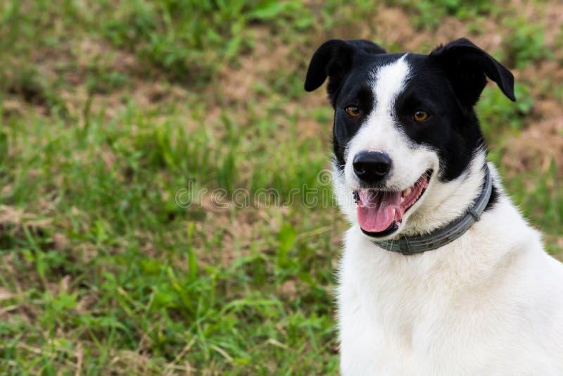 Lycklig gullig hund arkivfoto