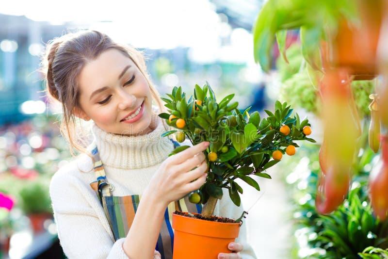 Lycklig härlig trädgårdsmästare för ung kvinna som rymmer det lilla mandarineträdet arkivfoto