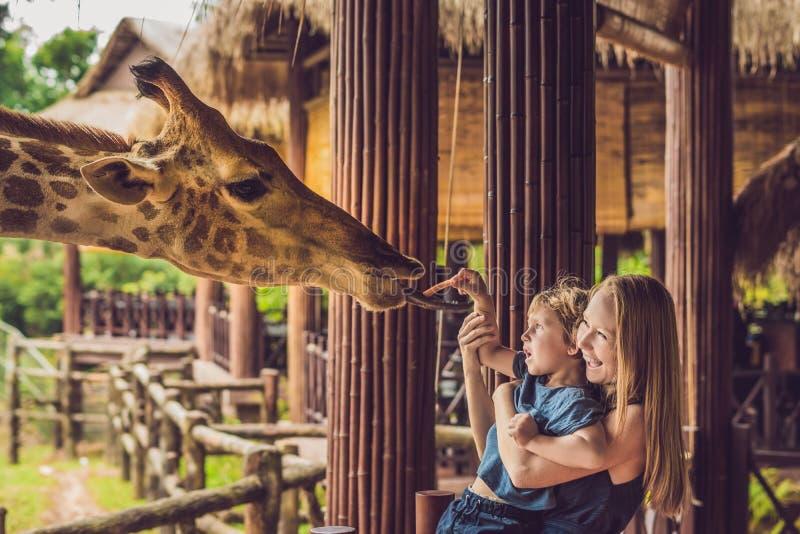 Lycklig hållande ögonen på och matande giraff för moder och för son i zoo Den lyckliga familjen som har gyckel med djursafari, pa arkivbilder
