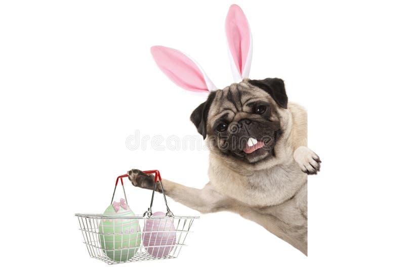 Lycklig hund för mops för påskkanin med kanintänder och pastellfärgade easter ägg i korg för trådmetallshopping royaltyfria bilder