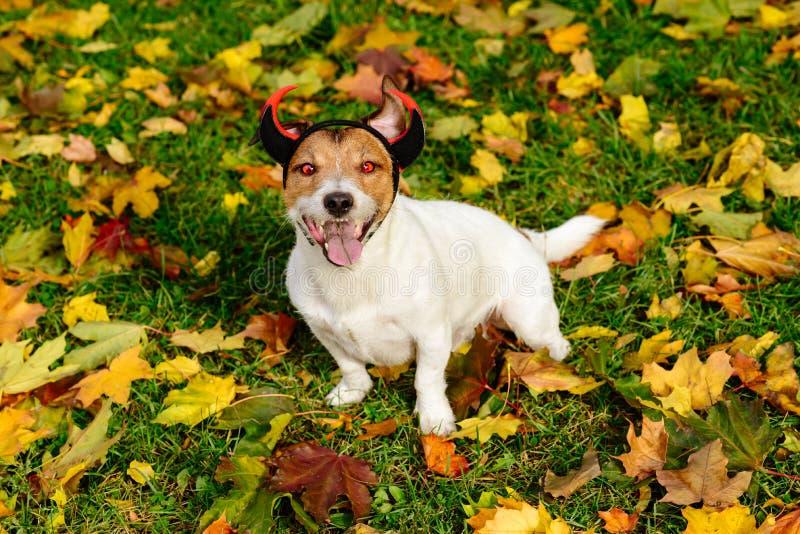 Lycklig hund som allhelgonaaftonjäkel med röda eldsvådaögon och horn arkivfoton