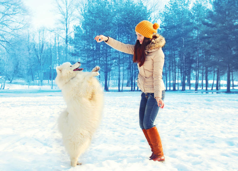 Lycklig kvinnaägare med den vita Samoyedhunden som spelar i vinter royaltyfri fotografi