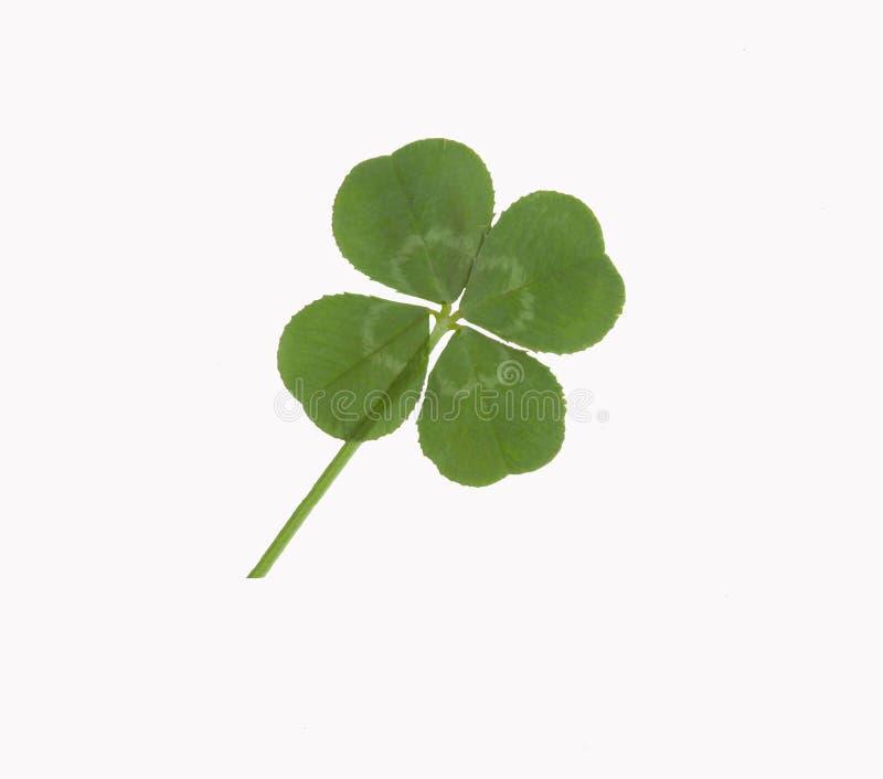 Lycklig Leaf För Växt Av Släkten Trifolium Fyra Royaltyfria Foton