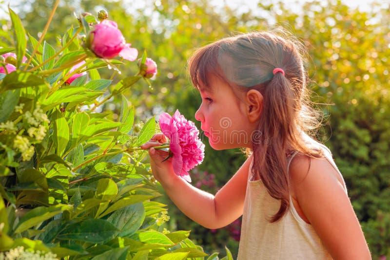 Lycklig liten flicka som luktar doftande rosa pioner fotografering för bildbyråer
