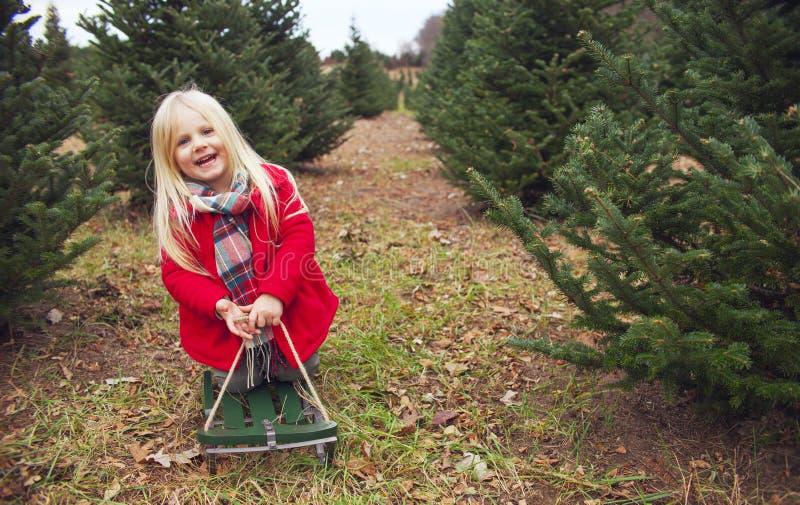 Lycklig liten flicka som sitter på kälken bland granträd royaltyfri bild