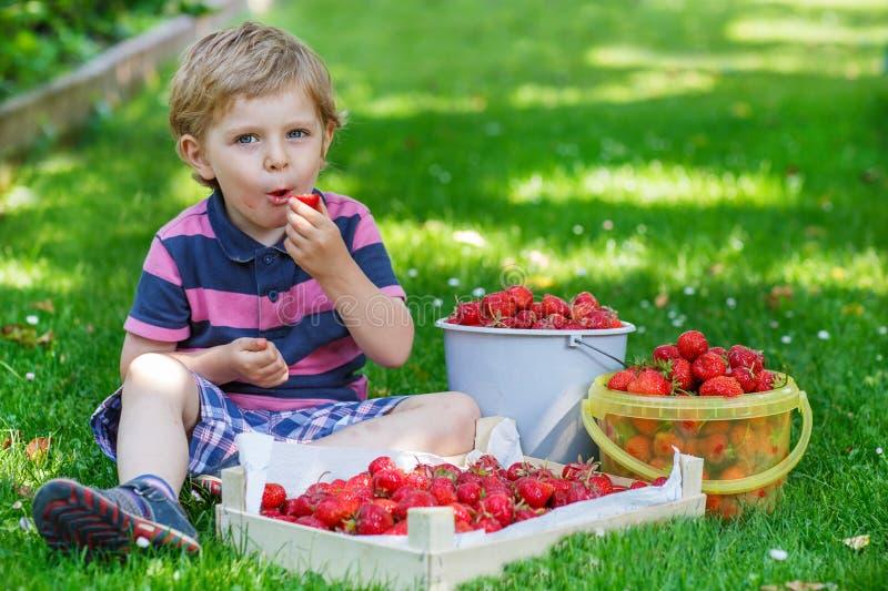 Lycklig liten litet barnpojke i sommarträdgård med hinkar av moget s fotografering för bildbyråer