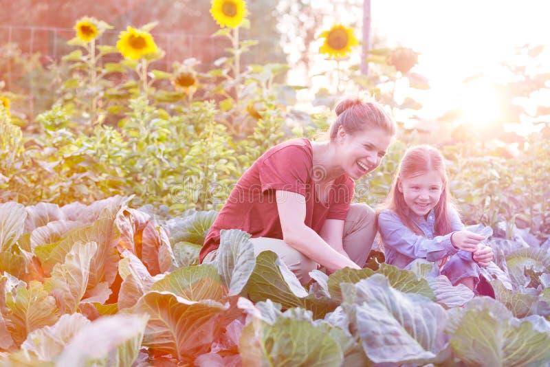 Lycklig moder och dotter som sk?rdar organiska k?lar p? lantg?rden royaltyfria bilder