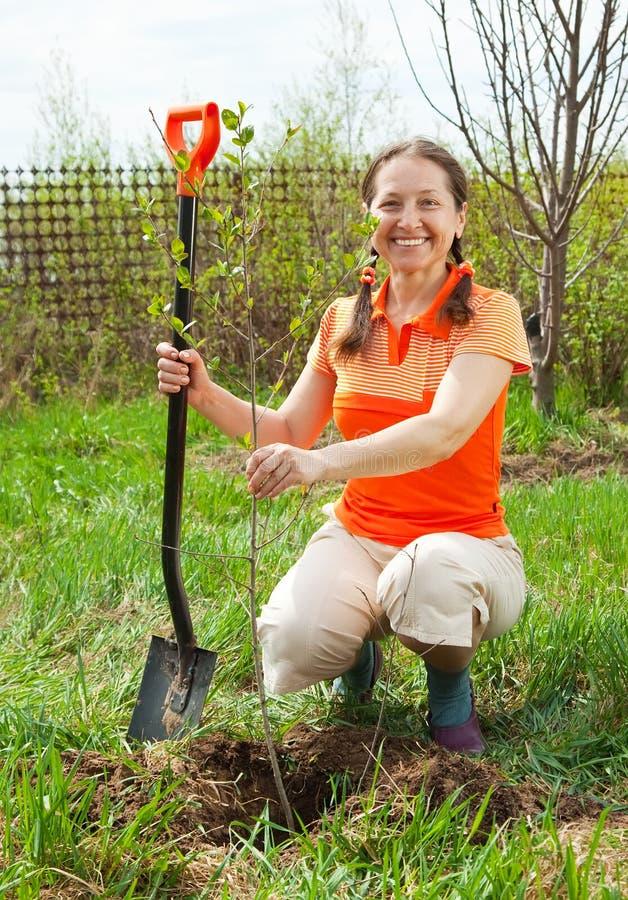 lycklig plantera treekvinna för frukt royaltyfri fotografi