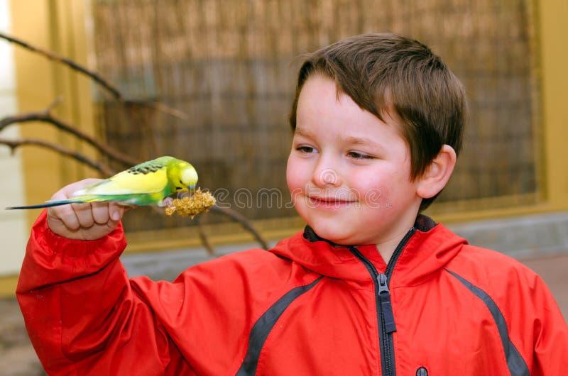 Lycklig pojkeinnehav- och matningsparakiter fotografering för bildbyråer