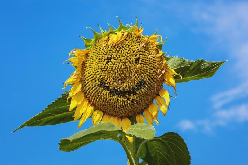 Lycklig solros som ler framsidan royaltyfria bilder