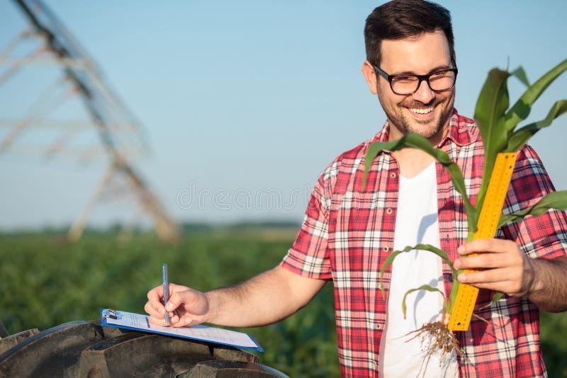 Lycklig ung bonde eller agronom som mäter ungt format för stam för havreväxt med en linjal som skriver data till ett frågeformulä royaltyfri bild