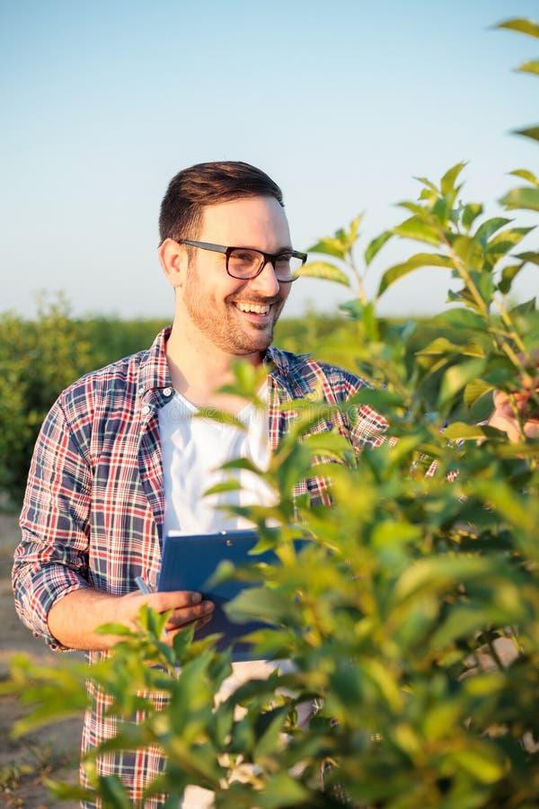 Lycklig ung manlig agronom eller bonde som kontrollerar unga träd i en fruktfruktträdgård royaltyfri bild