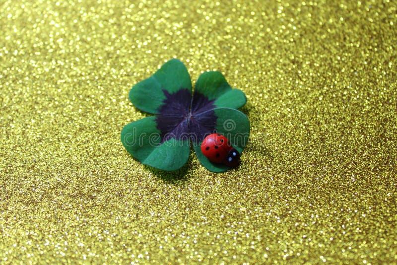Lycklig växt av släktet Trifolium och en nyckelpiga på en guld- glittery bakgrund