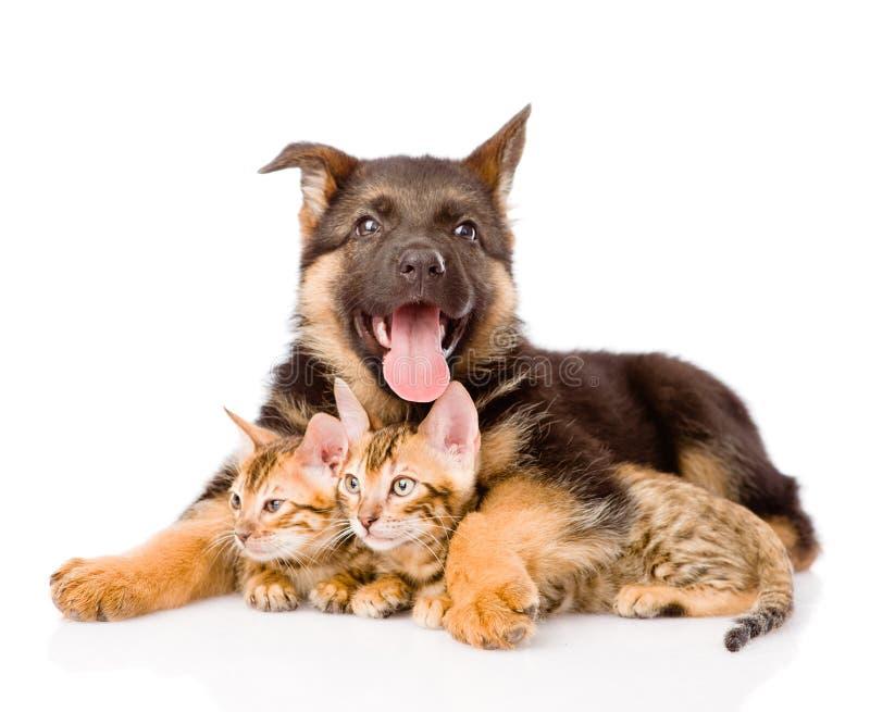 Lycklig valphund som omfamnar små kattungar Isolerat på vit arkivfoton