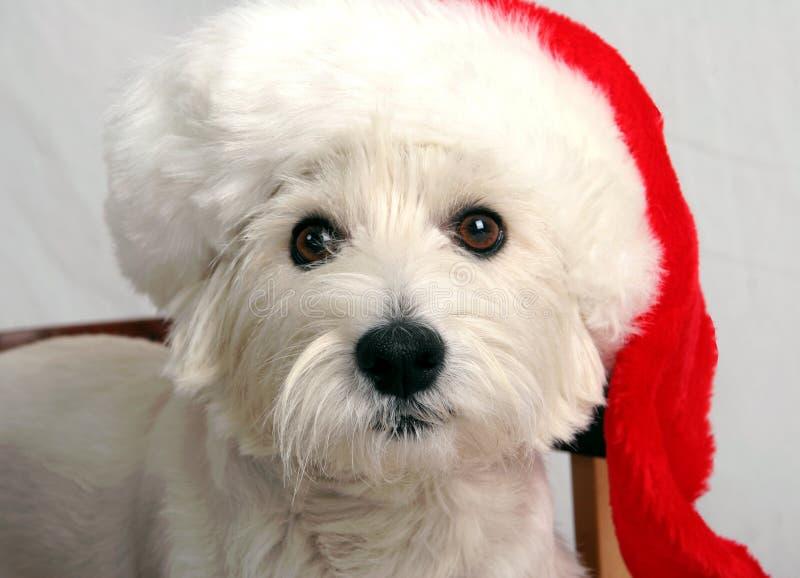 Download Lyckliga ferier fotografering för bildbyråer. Bild av terriers - 285795