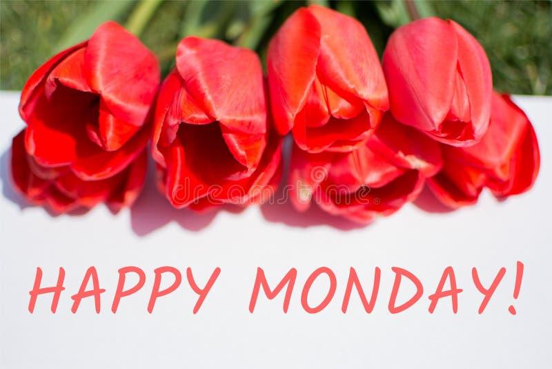 Lyckliga måndag Röda tulpan och text royaltyfri bild