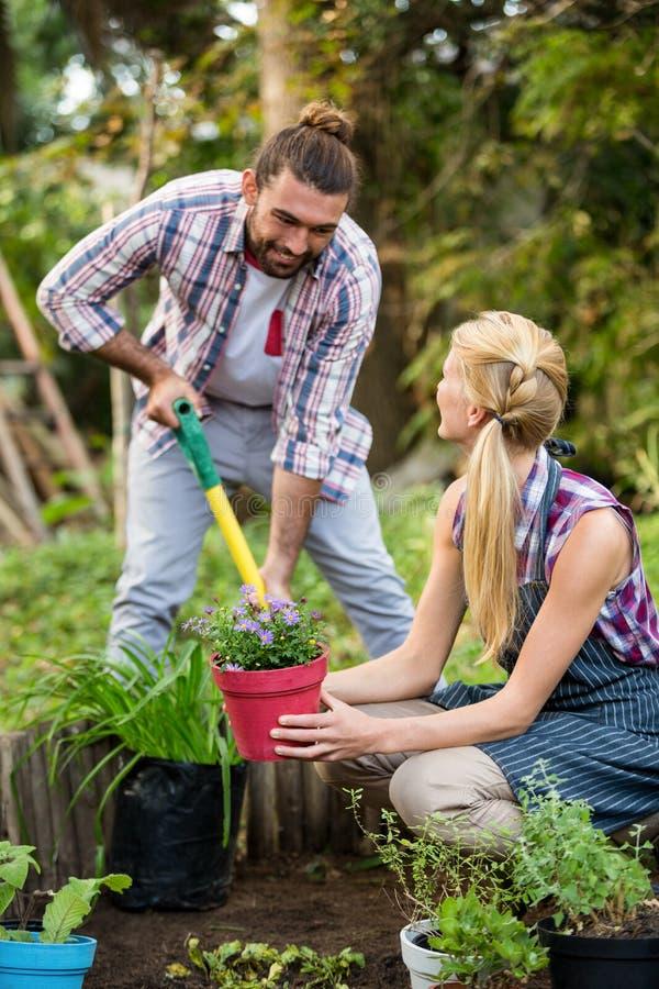 Lyckliga trädgårdsmästare som planterar lade in växter på trädgården royaltyfri fotografi
