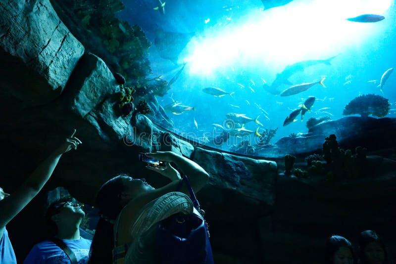 Lyckliga turister tar foto av akvariet, Hong Kong Ocean Park royaltyfria bilder