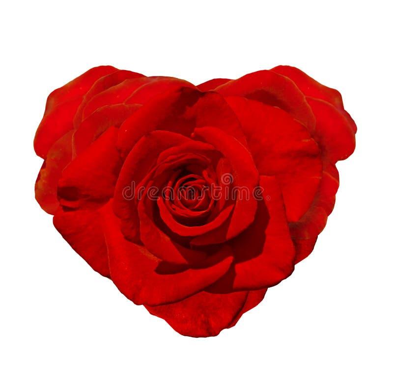 lyckliga valentiner för dag Röda Rose In The Shape Of en hjärta arkivbild