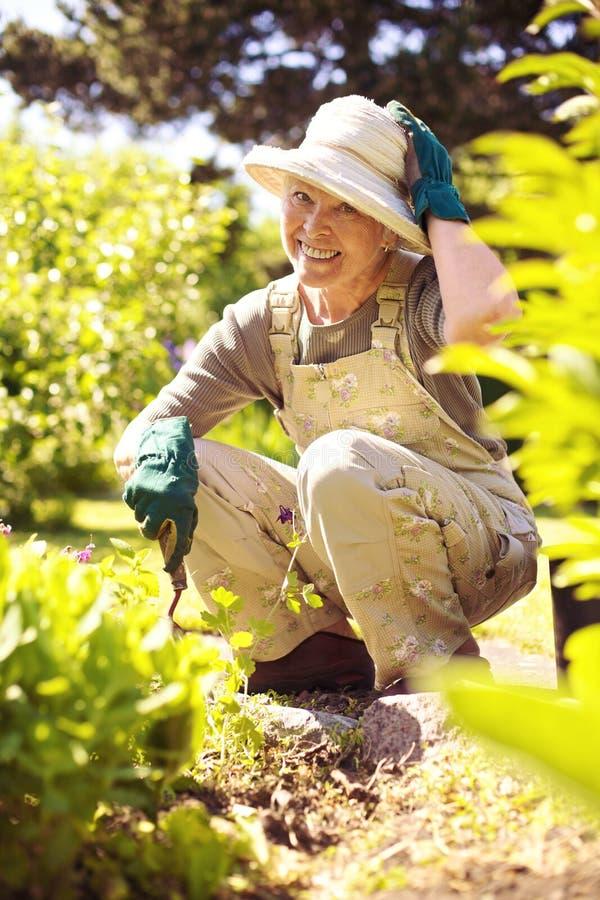Lyckligt arbeta i trädgården för äldre kvinna royaltyfri foto