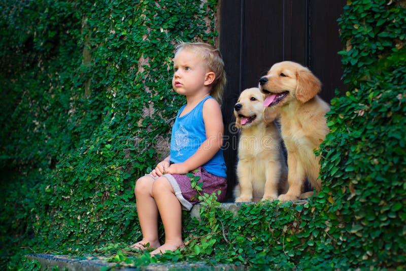 Lyckligt behandla som ett barn pojkesammanträde med två guld- labrador retriever valpar royaltyfri foto