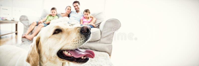 Lyckligt familjsammanträde på soffan med deras älsklings- gula labrador i förgrund arkivfoton