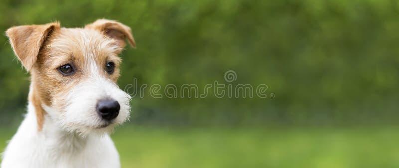 Lyckligt hundbaner med kopieringsutrymme arkivbilder