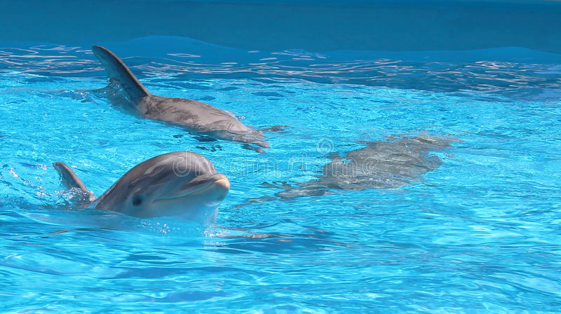 Lyckligt insidavatten för tre delfin arkivbild