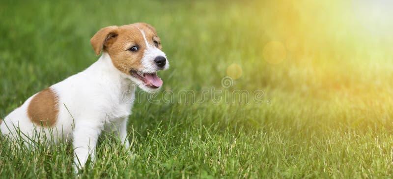 Lyckligt le hundvalpsammanträde i gräset royaltyfri fotografi