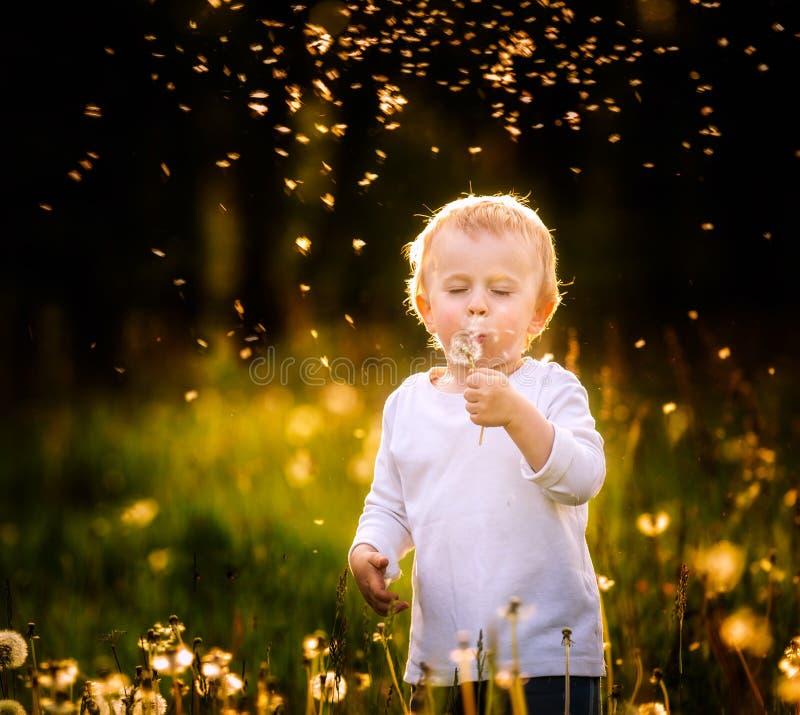 Lyckligt litet caucasian barn som blåser maskrosfrö fotografering för bildbyråer