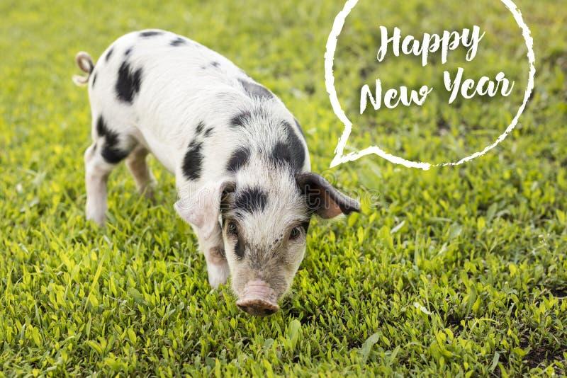 lyckligt nytt år År av det gula svinet royaltyfria foton