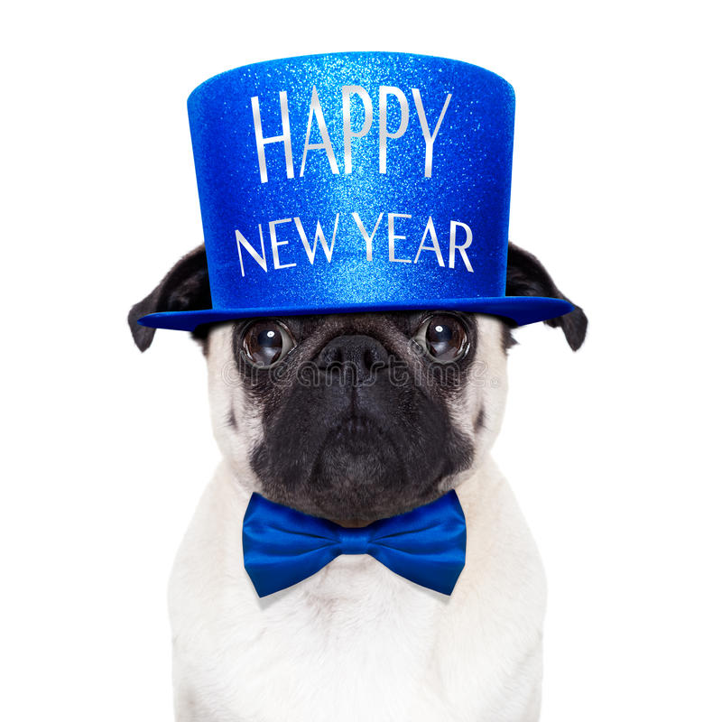 lyckligt nytt år för hund royaltyfri fotografi