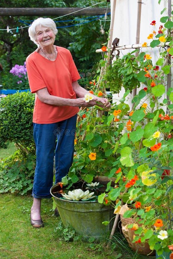 Lyckligt ta för gammal kvinna att bry sig hennes blommaträdgård royaltyfri bild