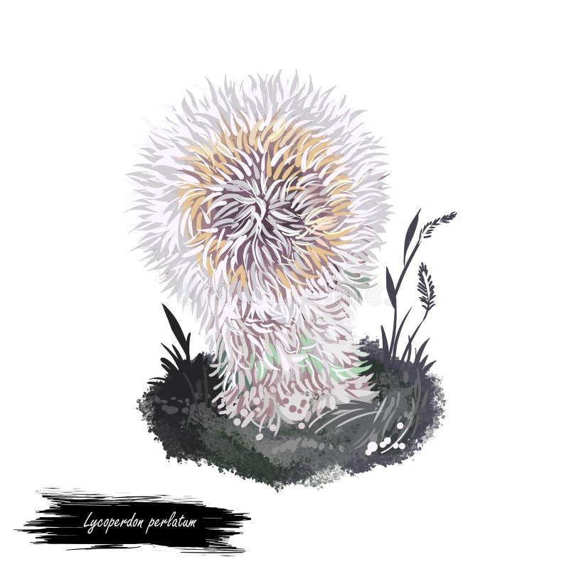 Lycoperdon perlatum mushroom digital art illustration, common puffball watercolor print. Devils snuff-box realistic drawing royalty free illustration
