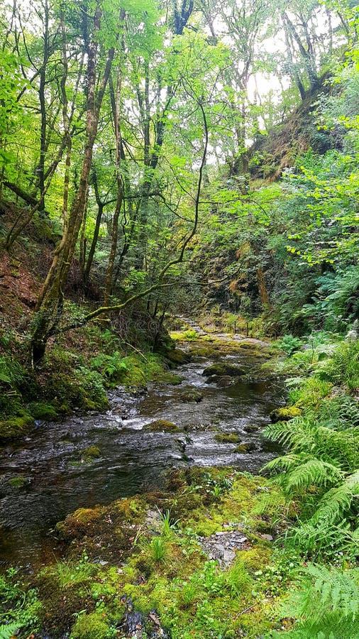 Lydfordkloof, Dartmoor Devon royalty-vrije stock foto's