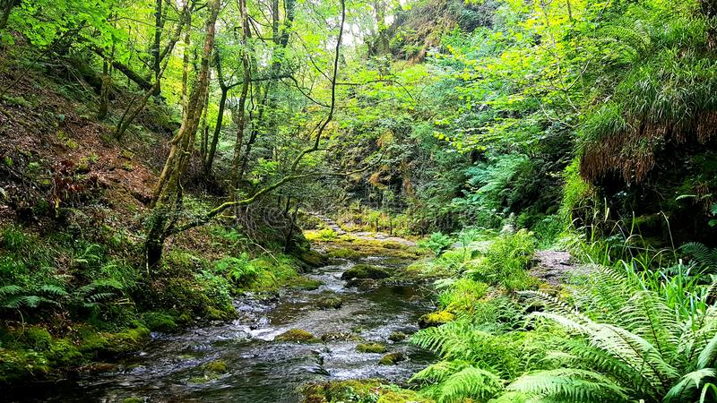 Lydfordkloof, Dartmoor Devon royalty-vrije stock afbeeldingen